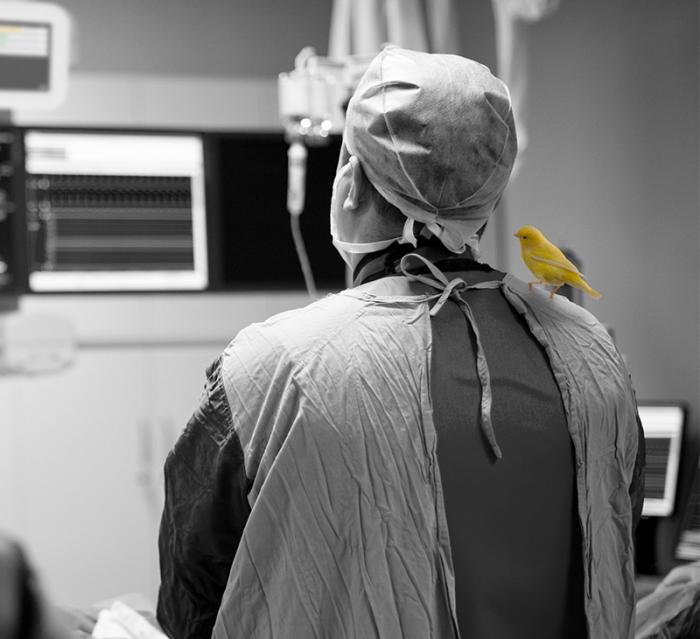 surgeon with a canary on their shoulder